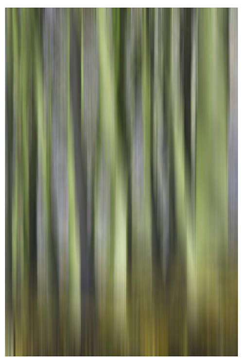 Abstract Image of Trees<br />