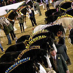 Grand Parade - Stallions, Geldings & Colts