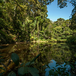 """Floresta e Lagoa (paisagem) fotografado em Viana, Espírito Santo -  Sudeste do Brasil. Bioma Mata Atlântica. Registro feito em 2008.<br /> <br /> <br /> <br /> ENGLISH: Forest e Lagoon photographed in Viana, Espírito Santo - Southeast of Brazil. Atlantic Forest Biome. Picture made in 2008."""