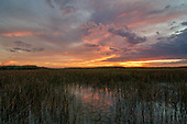 Florida Everglades Skies