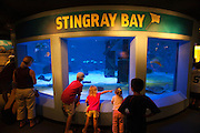 351021-1047G.Huey ~ Copyright: George H.H. Huey ~ Visitors watching the live stingray display at the Mystic Aquarium.  Mystic, Connecticut.