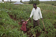 Peter Otieno hands his youngest son, Kepha, 3,  an ear of freshly cut corn, while he works in his fields outside their home in Kanyangilo Village, Kenya. Peter and his wife both thought they were suffering from witchcraft when they first came across The Children Behind project and learned that they were HIV positive and began receiving treatment. The project aims to improve the quality of life for orphans, vulnerable children, and their caregivers in communities with a high prevalence of HIV. The project was started in 2002 and has been funded solely through CRS private donations. It currently supports over 13,000 people. Peter's wife went on to give birth to two children who have both tested negative for HIV. In addition to help with their medical care Peter, his wife, and their 8 children receive help with medical care and school costs. (CONSENT FORMS SIGNED)