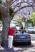 Tourists and locals descend on Mc Dougall Street, Kirribilli, North Sydney to see the Jacaranda Trees in full bloom.