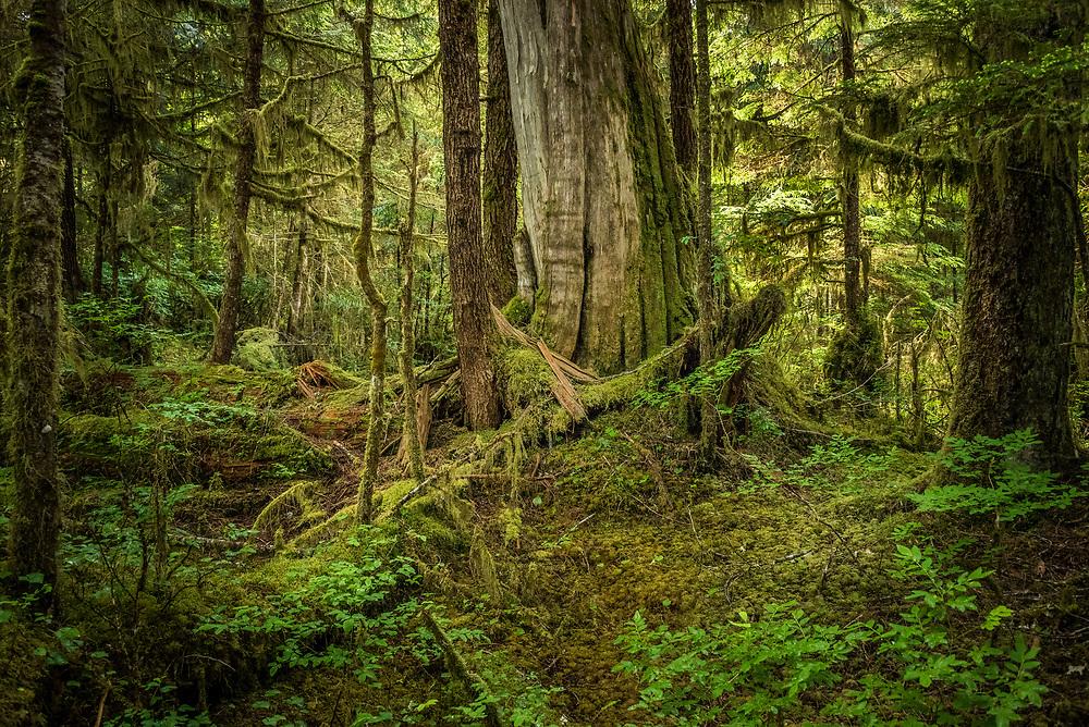 Great Bear Rain Forest, British Columbia