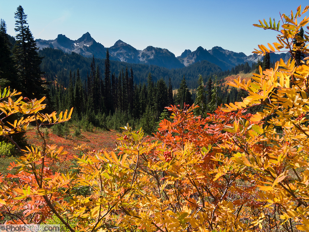 Tatoosh Range, Mount Rainier National Park, Washington, USA. Fall foliage colors.
