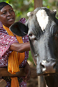 Madina Muzenze, photographed here with her cow, is a member of Gogoki womens group in Uganda. She is wearing an amazing outfit because it's the day before her graduation ceremony and the celebrations are already underway.