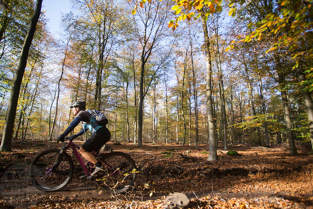 Bij Austerlitz rijdt een vrouw op een mountainbike door de bossen op een mooie herfstdag.<br /> <br /> A woman on a mountain bike enjoys the beautiful autumn weather in the woods near Austerlitz.
