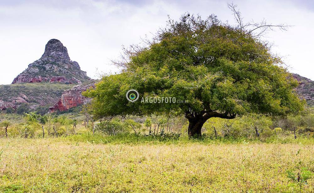 Umbu caja, arvore sagrada no sertao, e ao fundo, o Morro do Pico no PARNA da Serra do Catimbau. / Umbu caju, sacred tree of the brazilian northeast. Buique, Pernambuco, Brazil 2007.