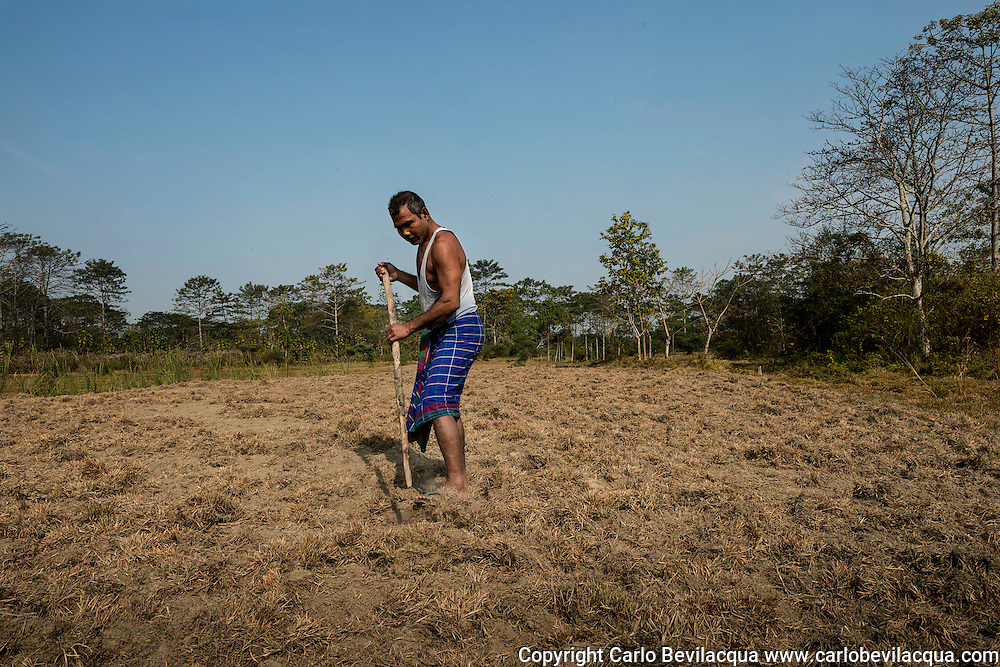 Jadav Mulai Paleng The Forest Man<br /> The story of Jadav Payeng Mulai could be the one told by the French writer Jean Giono in his book The Man Who Planted Trees.In fact he has planted a tropical forest of 1500 hectares on a sandbar in the heart of the Brahmaputra River which had been devastated by floods in 1979 , when Mulai was 16 years old. Trees, houses and villages were overwhelmed and taken away by the water. Many animals, snakes in particular, died. Mulai found them lifeless on the sand banks. It was the turning point of his life. He started planting bamboo trees on behalf of the forestry division. He has never stopped, choosing to plant trees, bringing animals and insects from his village and transforming the whole area into a real forest populated by birds and deer which in turn have attracted predators such as vultures and tigers, and even elephants and rhinos, which migrate from the nearby Kaziranga park.Jadav Mulai has been repeatedly awarded accolades for his efforts.Today, the inhabitants of the villages near the forest are proud of the work that has been done but the early years were not easy for Mulai. In fact, after some elephants destroyed a village many people blamed Mulai for what had happened and he had to ask for help and protection from the forest department .Now the forest is known by the name of &ldquo;Mulai Forest or Mulai Kathoni&rdquo;. Jadav Payeng belongs to the ' Mising ' tribe and today lives in Kokilamukh , a village near the river Bramhaputra in the district of Jorhat , Assam. This  state in North East India is where he dwells in a small hut which he shares with his wife Binita and their three children but he spends most of his time in the forest. Mulai knows each single tree and every path. He treats the forest with the affection and respect reserved for one&rsquo;s offspring.Today his new goal is to recommence a second bio diverse forest in another sand bar island in the Brahmaputra Area and teach the world the priceless heritage of biodiversity.