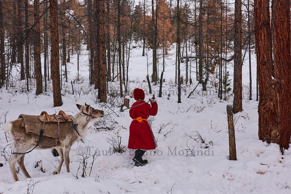 Mongolie, province de Khovsgol, les Tsaatans, éleveurs des rennes, campement en hiver des Tsaatan, jeune garçon en compagie de son renne // Mongolia, Khovsgol province, the Tsaatan, reindeer herder, the winter camp, young boy with his reindeer