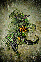 A natural seaweed formation resembling flowers in flowing hair.