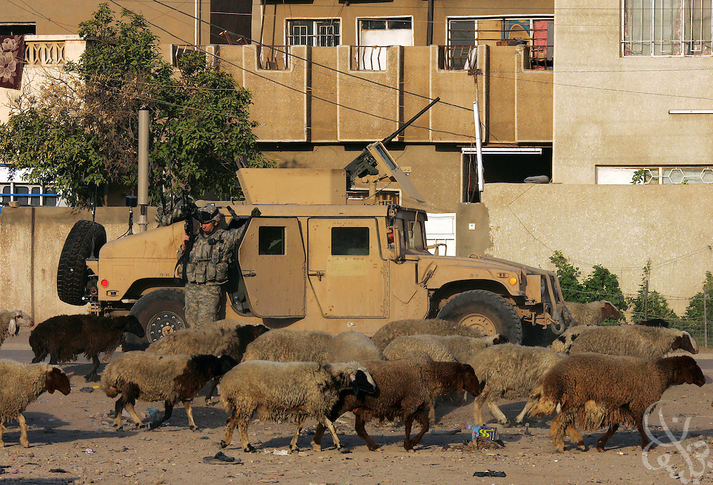 A U.S. Army 1-14 Cavalry, 3rd Stryker Brigade Combat team soldier watches a flock of passing sheep during an operation in the Doura neighborhood in Baghdad August 08, 2006.
