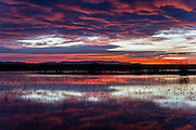 Sunrise at Bosque del Apache National Wildlife Refuge