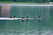 4 LOONS TRAVELING QUITELY ON CALM WATERS