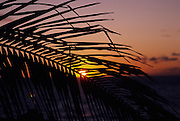 Palm leaf at sunset<br />