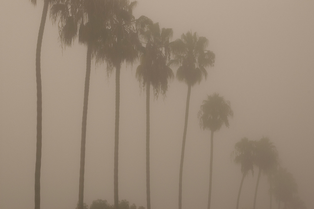 View through the fog of rows of palm trees lining Maryland St.