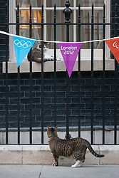 © licensed to London News Pictures. London, UK 25/07/2012. Freya, George Osborne's cat goes past Larry the cat which  is relaxing next to the window in Downing Street. Photo credit: Tolga Akmen/LNP