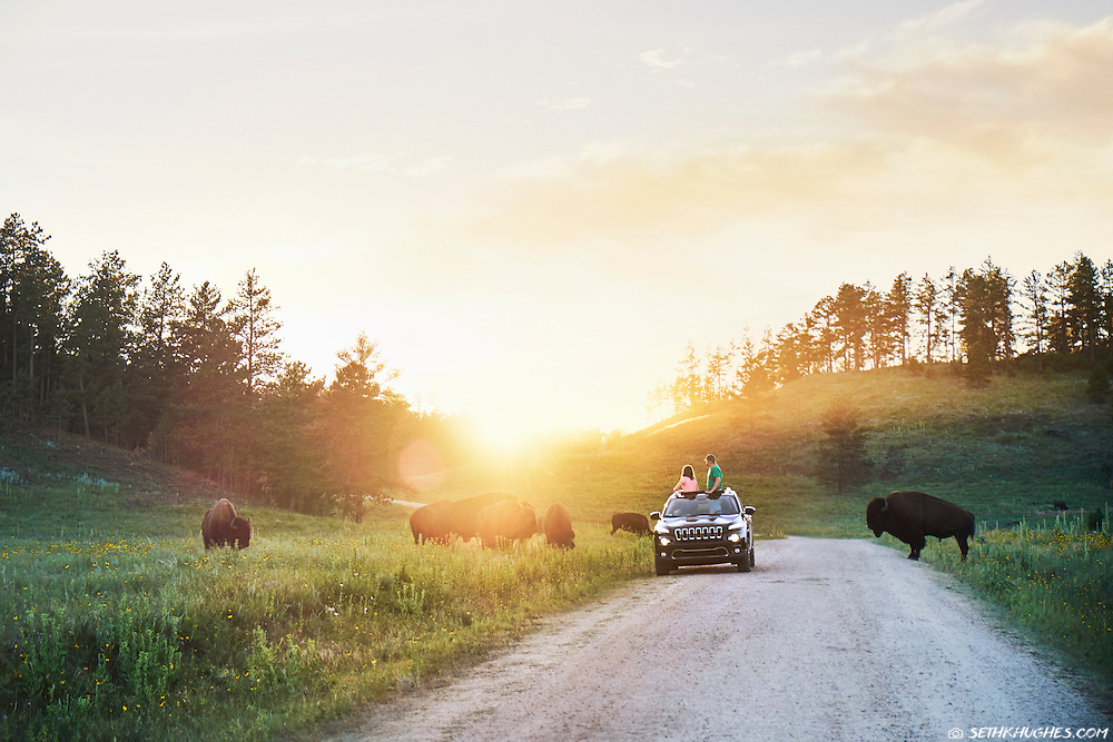 A father and daughter stop to view wild bison crossing the road in Custer State Park, South Dakota.