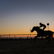 Erbil Horse Racing