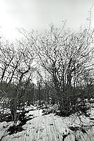 Nakne trær på Leitaneset.<br /> Foto: Svein Ove Ekornesvåg