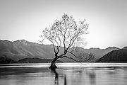 B&W of the lone willow tree in Lake Wanaka, New Zealand