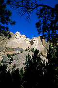 Morning light on Mount Rushmore through silhouetted pine trees, Mount Rushmore National Memorial, South Dakota