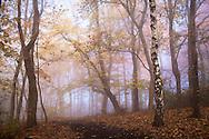 Europa, Deutschland, Nordrhein-Westfalen, Herbst im Wald am Ruhrhoehenweg im Ardeygebirge bei Witten.<br /> <br /> Europe, Germany, North Rhine-Westphalia, autumn in a forest at the Ruhrhoehenweg in the Ardey mountains near Witten.