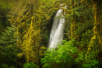 Waterfall spilling out of the lush Quinault Rainforest, Olympic National Park, Washington