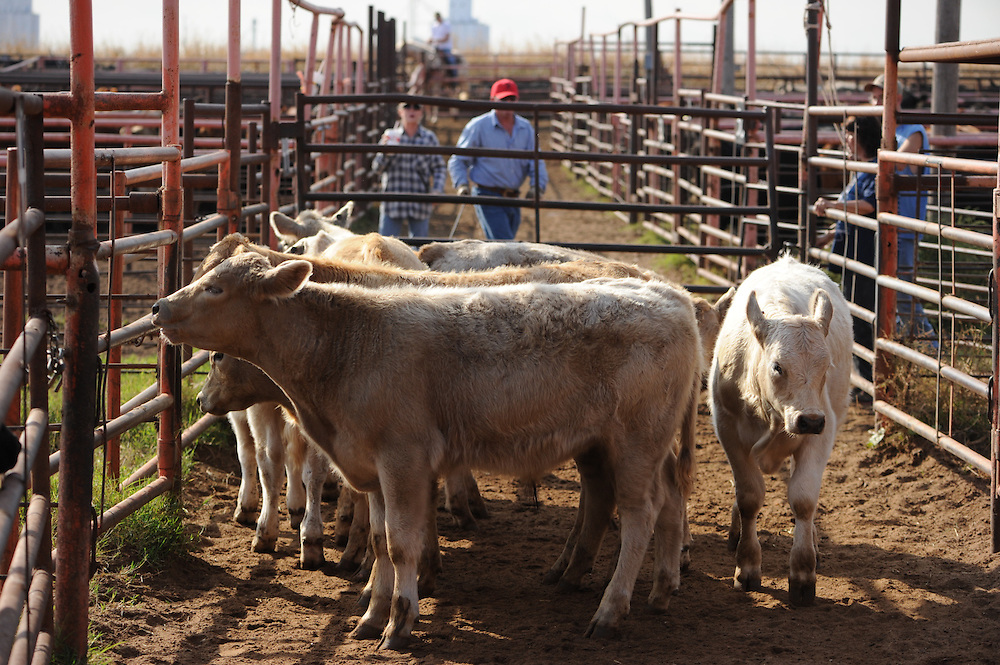 OQBN Sale at the Cherokee Sales Company in Cherokee Oklahoma
