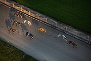 VJ Fillinthegaps (#1 dog) leads the pack during the 3/8s race, a 660-yard race, at Derby Lane dog track in St. Petersburg, Fla.