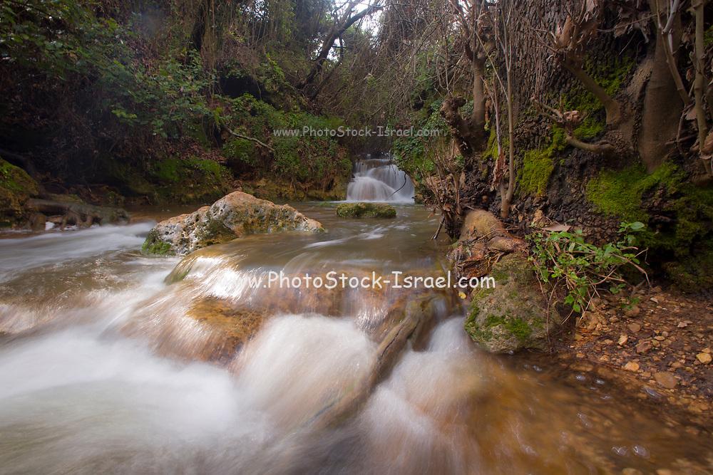 Israel, Galilee, Amud (Pillar) stream nature reserve and park