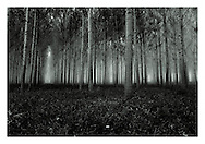 """Forest #1, 1990/2015, Tuscany, Italy. The negative was made in 1990 on Ilford FP4 using a Leica M4 with 35/2 Summicron lens (the fabled version 4) and hand-printed by me, the photographer, in 2015, on 12"""" x 16"""" (30.48cm x 40.64cm) Adox Nuance fibre paper as an edition of 15 prints only. The prints are split-selenium toned silver gelatin prints, that have been processed using archival methods. Each print is stamped, titled, numbered, dated, signed and comes with a certificate of authenticity. Please email me at info@simon-larbalestier.co.uk for pricing, availability and shipping info. All prints are shipped from the United Kingdom."""