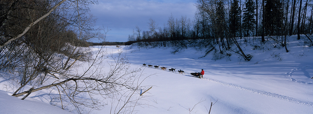 USA, Alaska, Anvik, Musher races along snow-covered slough toward Yukon River during Iditarod sled dog race