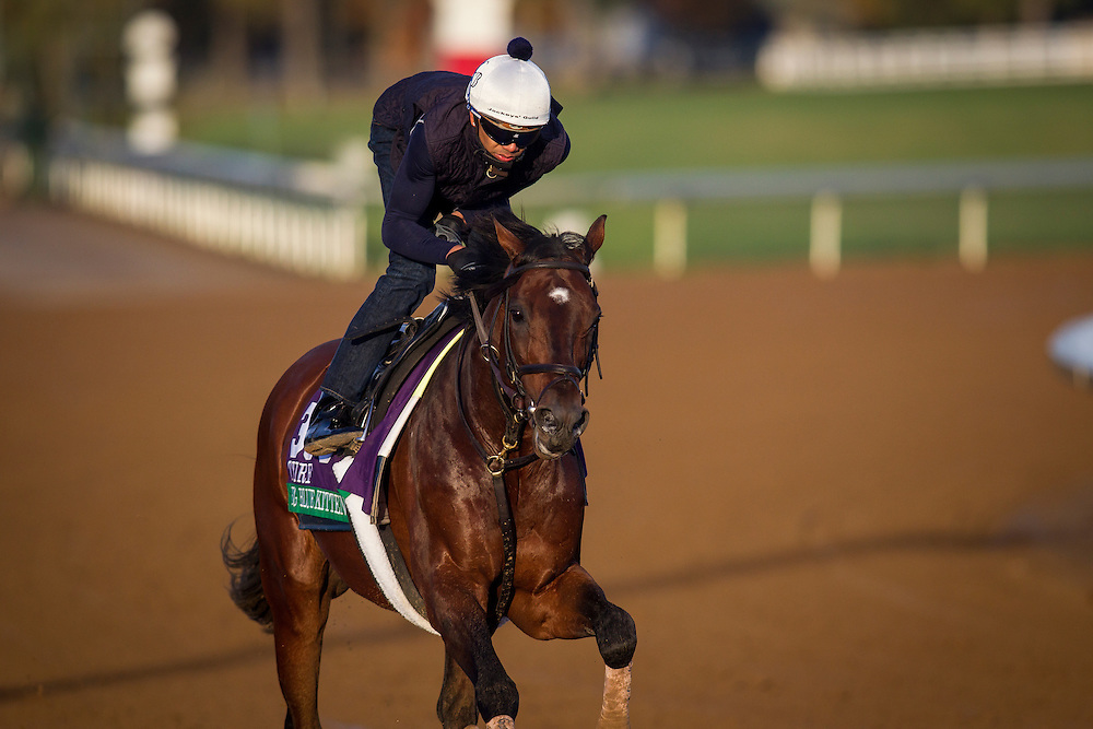 October 29, 2015:   Big Blue Kitten, trained by Chad C. Brown and owned by Kenneth L. and Sarah K. Ramsey, exercises in preparation for the Longines Breeders' Cup Turf at Keeneland Race Track in Lexington, Kentucky. Alex Evers/ESW/CSM