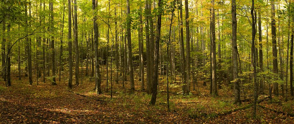 Roaring Fork Motor Nature Trail panorama