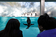 two people watching and interacting with penguin