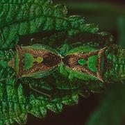 Madagascar Invertebrates