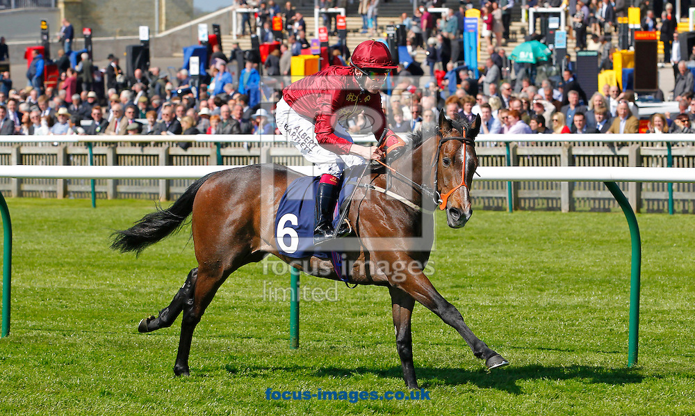 Picture by John Hoy/Focus Images Ltd +44 7516660607<br /> 16/04/2014<br /> Jamie Spencer riding Mind Of Madness winning the Horsesource Seabuckthorn Conditions Stakes (Bobis Race) at Newmarket Rowley, Newmarket