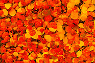 Flowers - Plants