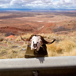 040213     Brian Leddy<br /> An angora sheep skull looks out over the land below on US 89 near Bitter Springs, Ariz. Tuesday. The skull resides near where to roadway partially collapsed due to a recent geologic event.