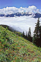 Clouds fill the Elwha Valley below the Bailey Range, Olympic National Park.  Washington, USA