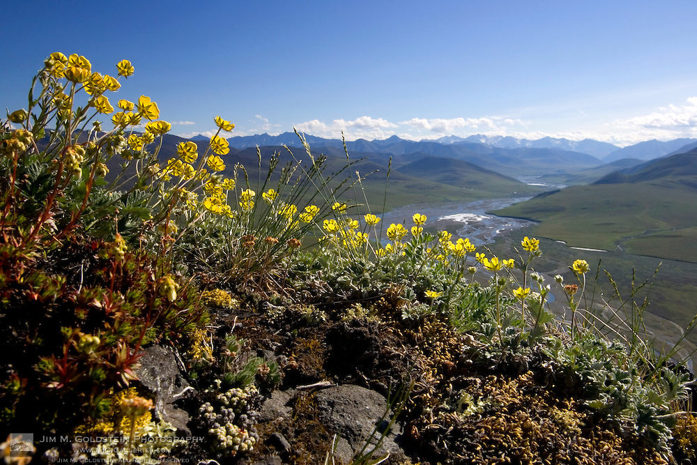 View of the Kongakut River Valley, looking south towards the Brooks Mountain Range from Caribou Pass.