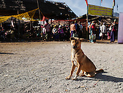 A stray dog at the entrance to the  Indein market, Myanmar.