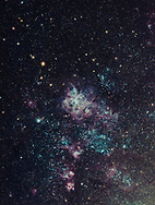 NGC 2070, the Tarantula Nebula, and surrounding nebulosity in the Large Magellanic Cloud. The Tarantula is a massive area of star formation in another galaxy, the nearby LMC in the Local Group of galaxies the Milky Way belongs to. This object, despite being 160,000 light years away, is large and bright enough to see with the unaided eye, but it can be seen only from the southern hemisphere. <br /> <br /> The images for this stack were taken  January 17, 2019, under a program I uploaded to iTelescope, the robotic telescope subscription service with observatories around the world. This was with the 11-inch Celestron Rowe-Ackerman Schmidt Astrograph, T68, at the Bathurst Observatory in NSW. It is a stack of 8 x 30-second, 8 x 60-second, and one 2-minute exposure, all at f/2.2 with a  ZWO 1600 one-shot color CCD camera. The short exposures add the bright core area, to prevent it from being blown out. However, I should have programmed in more long exposures, despite the fast f/2.2 speed of the RASA astrograph. The different exposure sets are blended with luminosity masks. so the short exposures contribute just the bright areas &mdash; the nebula cores and bright stars.<br /> <br /> The small rich star cluster at left is NGC 2100; the middle nebula of the complex at bottom is NGC 2077.  The nebulas in the LMC seem to have a lot of cyan from oxygen emission and are not the deep red of more usual hydrogen-alpha nebulas in the Milky Way. <br /> <br /> North is at top in this orientation, with east at left, to match the usual naked eye and binocular view as you view the LMC looking south. The camera&rsquo;s long axis seems to be oriented north-south, not east-west. Plus being at the prime focus of the RASA astrograph, raw images are flipped mirror image and so need re-flipping to make them match the sky.<br /> <br /> This was my first iTelescope session and target, so the program of exposures was a test and experiment. But overall it worked OK. However, it took of month with a couple of reschedules due to cloud and other bookings