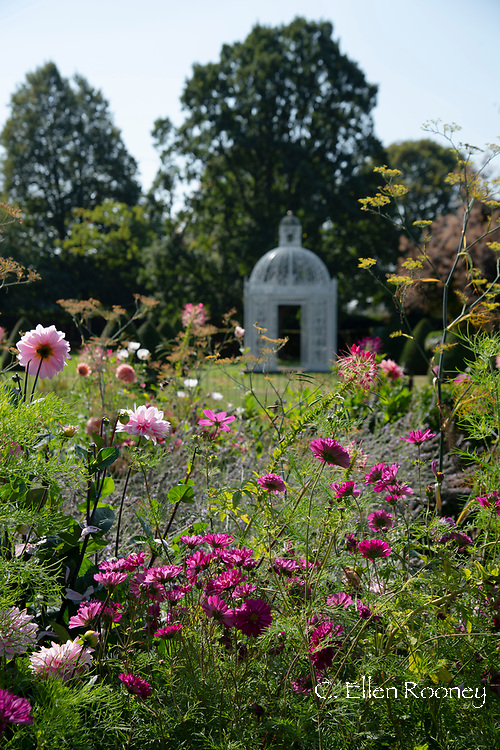 A mixed border of pink Dahlias, Cleome and Cosmos at Chenies Manor House, Chenies, Rickmansworth, Buckinghamshire, UK