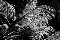 images from my new 2010 Calendar - Nature in Black and White.