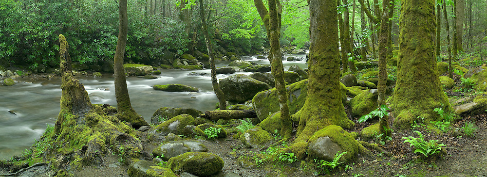 Lush, verdant greens alongside the Middle Prong of the Little River, Great Smoky Mountains National Park, Tennessee, USA