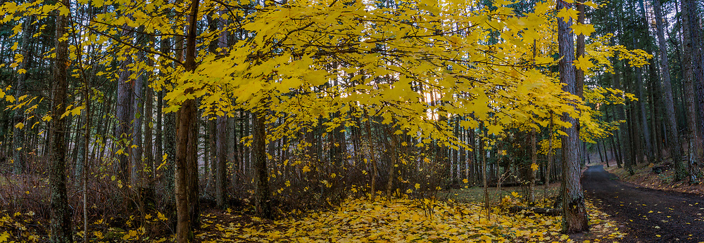 Fall leaves cover the ground of Heyburn State Park in North Idaho.