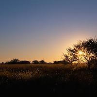 Africa, Botswana, Chobe National Park, Giraffe (Giraffa camelopardalis) in Savuti Marsh at sunrise