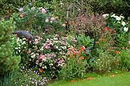 Poppy Cottage Garden - England, Summer